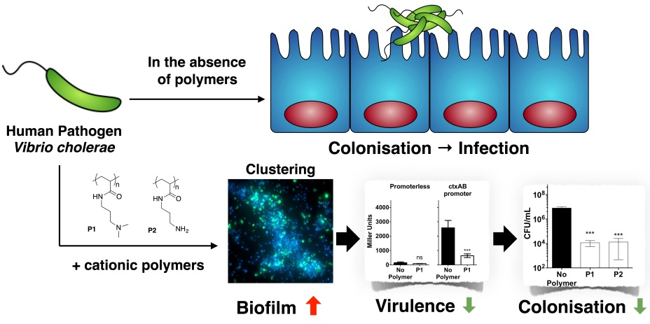 biofilm formation and colonization are of prime Colonizing pneumococci form well-organized biofilm communities in the nasopharyngeal environment, but the specific role of biofilms and their interaction with the host during colonization and.